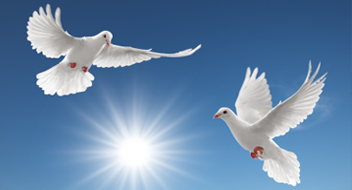 doves_02